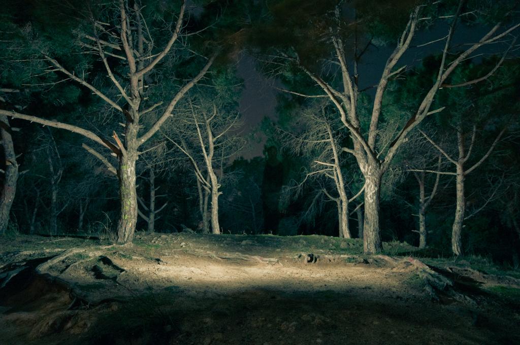 Fotografías nocturnas en el bosque