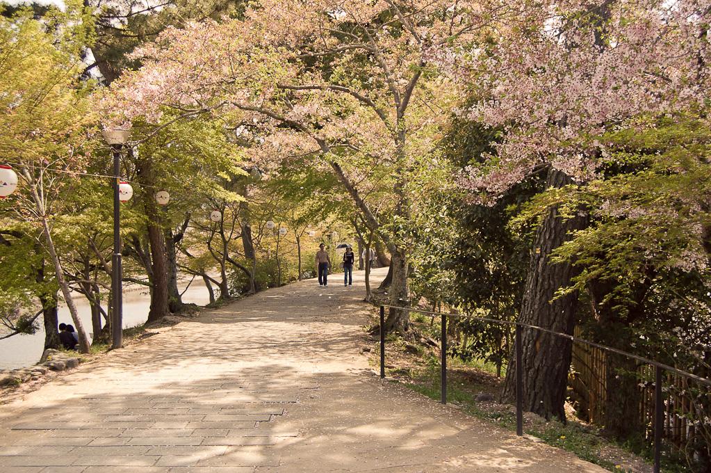Cerezos y Té – Japón