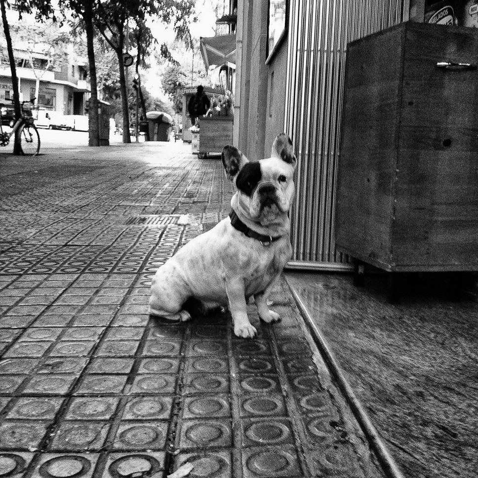 El perro guardián del bar