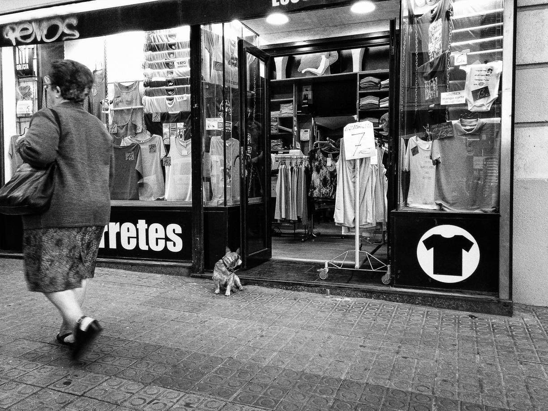 Perro vigilando tienda, Barcelona