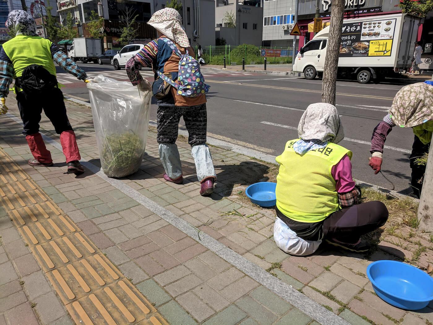 Quitando hierbas a mano – Corea del Sur